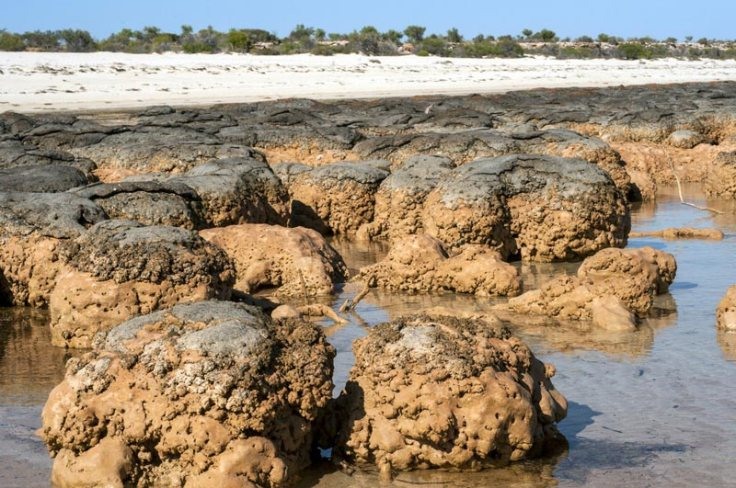 12158-stromatolites-close.jpg